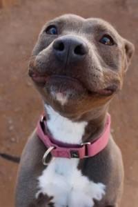 hond lachen