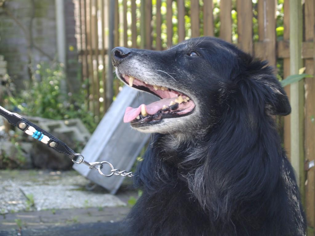 10 tekenen dat jij een echt hondenmens bent!