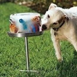 Maak zelf een koude snack voor je hond