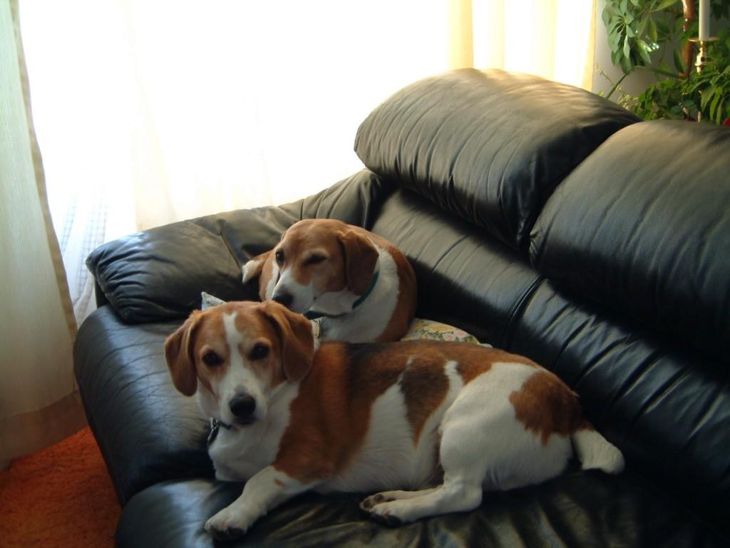 Je hond wel of niet op de bank?