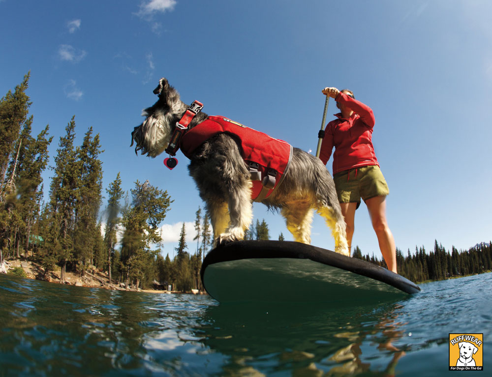 Veilig in het water met een zwemvest