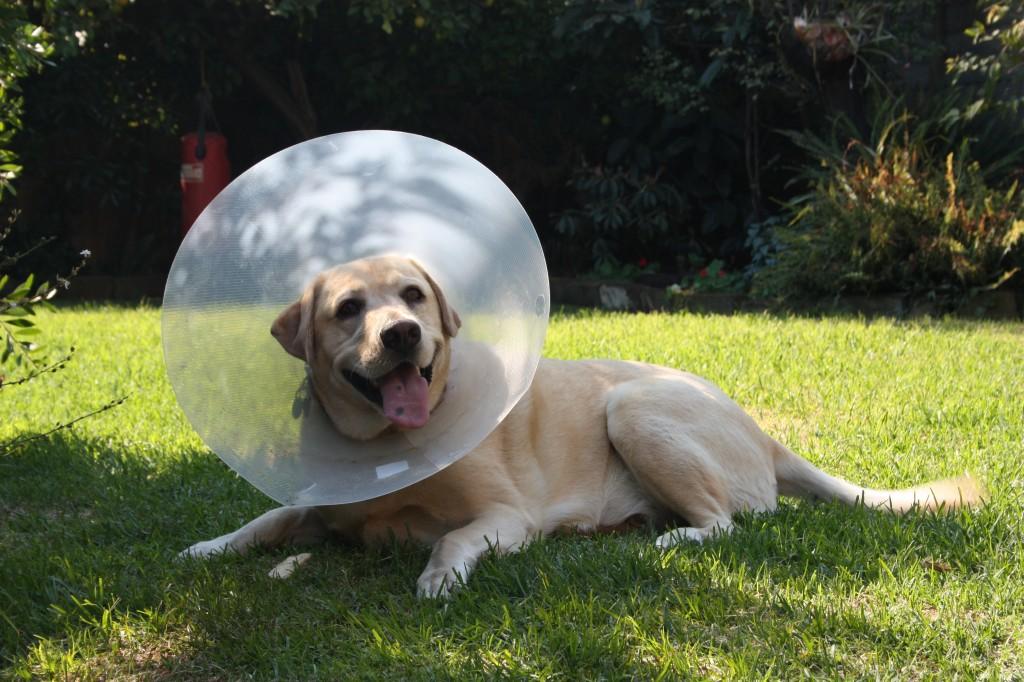 Verzekering hond, ja of nee?