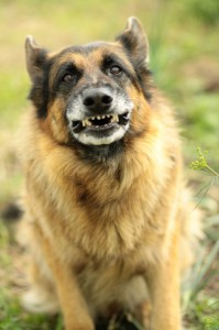 hondenbeet