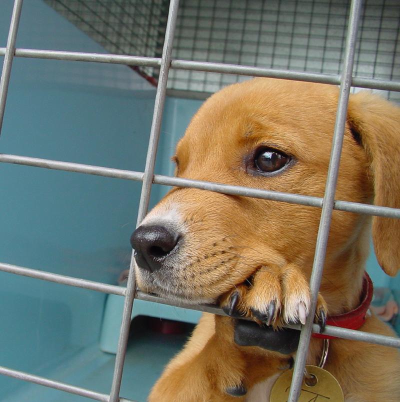Waarom belanden zoveel honden in het asiel?