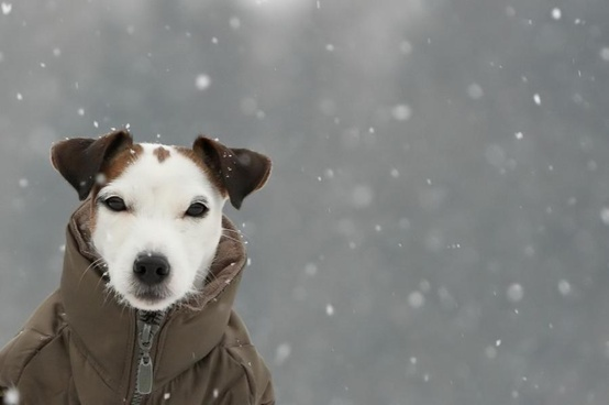 Bewegen met je hond in de winter
