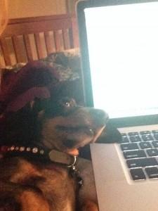 hond laptop