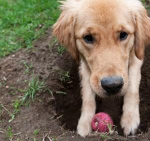 hond begraafd speeltje