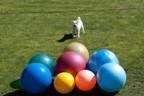 Sportieve koppels gezocht, word jij een hondensport reporter?
