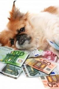Hoeveel kost een hond per jaar?