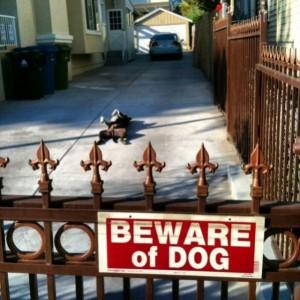 pas op een hond