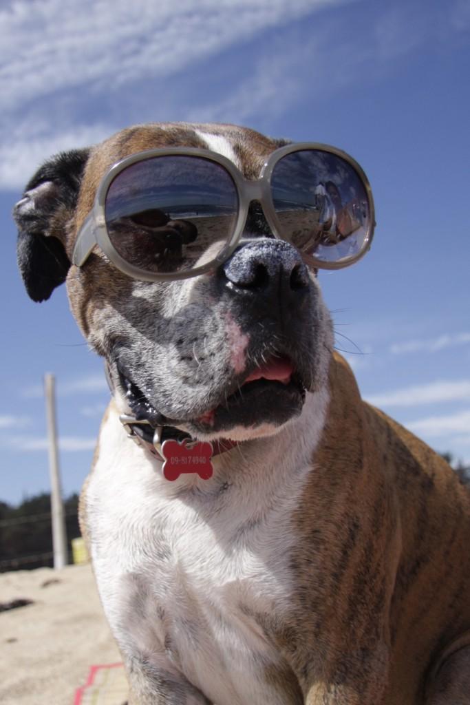 Ik ga op vakantie en neem mee: De hond!