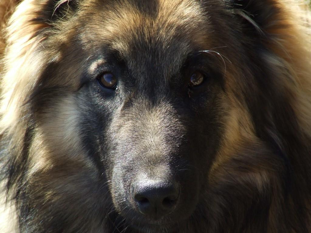 Hulpmiddelen om je huis hondenhaar vrij te houden