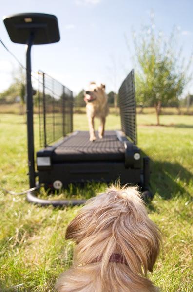 Een loopband voor honden: Hoe, wat en wanneer?