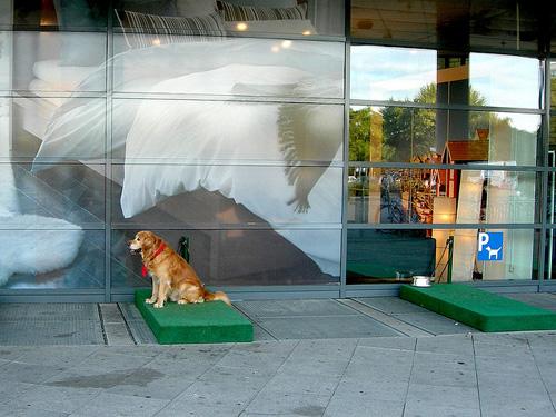 Parkeerplaats voor de hond bij IKEA