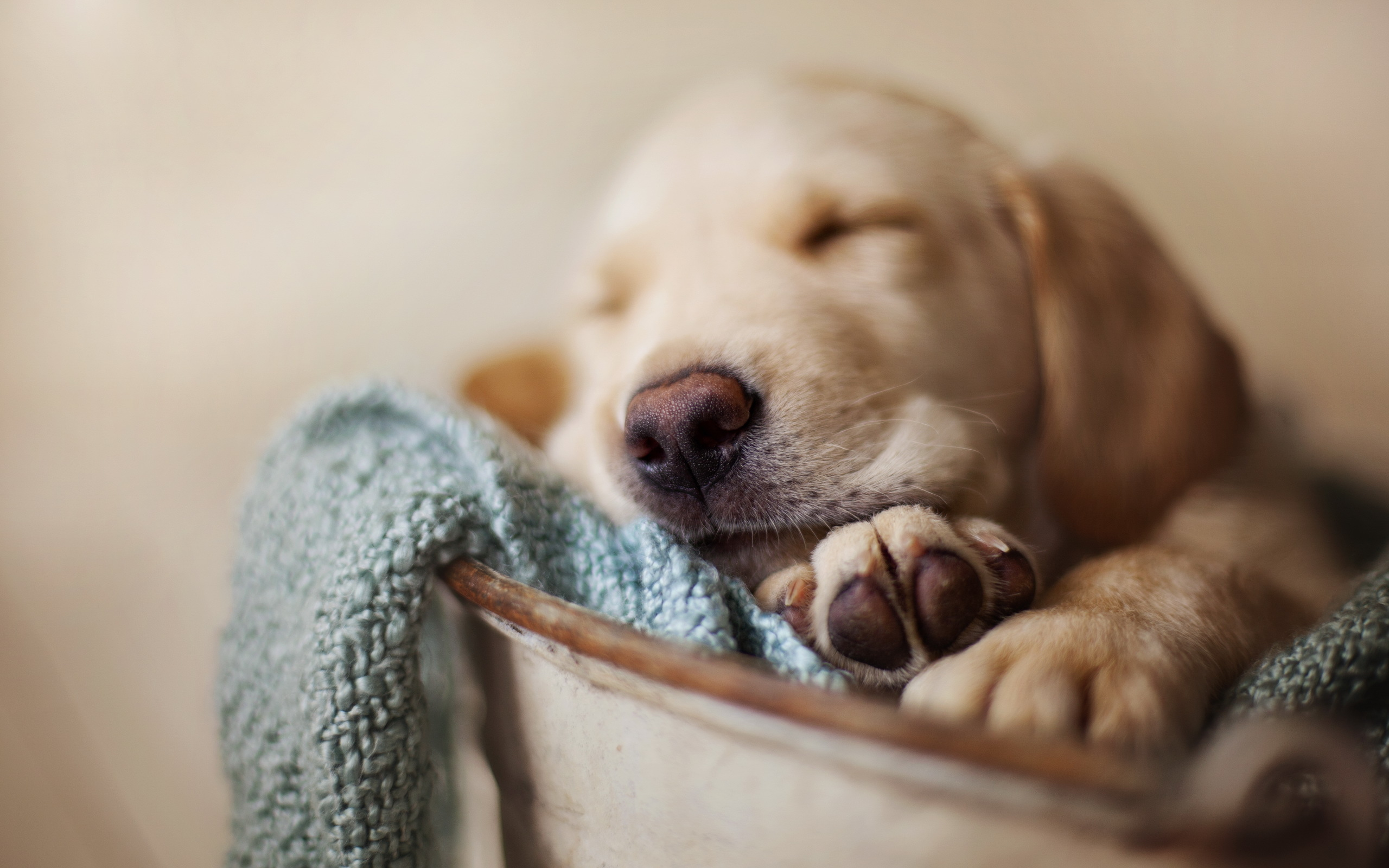Je puppy mee naar huis