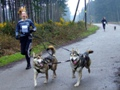 Hardlopen met je hond: Canicross
