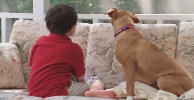 Een familie adopteerde een mishandelde Pitbull, maar wat ze er voor terugkrijgen is onbetaalbaar