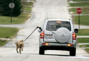 hond beweging