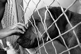 adopteereenhond