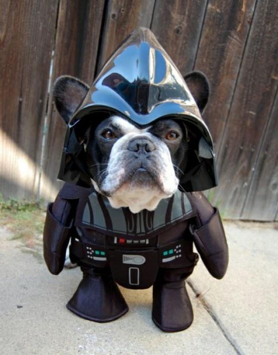 hond aankleden