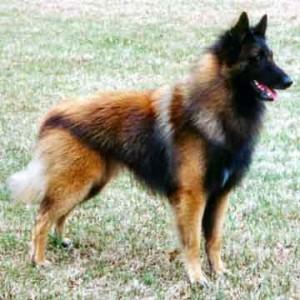 hondenvacht