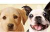 webshop honden