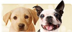 Bol.com opent webshop voor dieren
