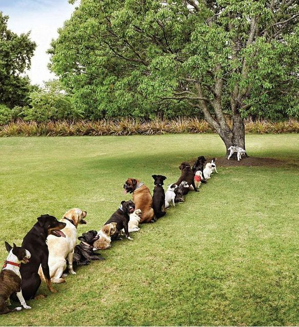 Je hond uitlaten, meer dan alleen even laten plassen