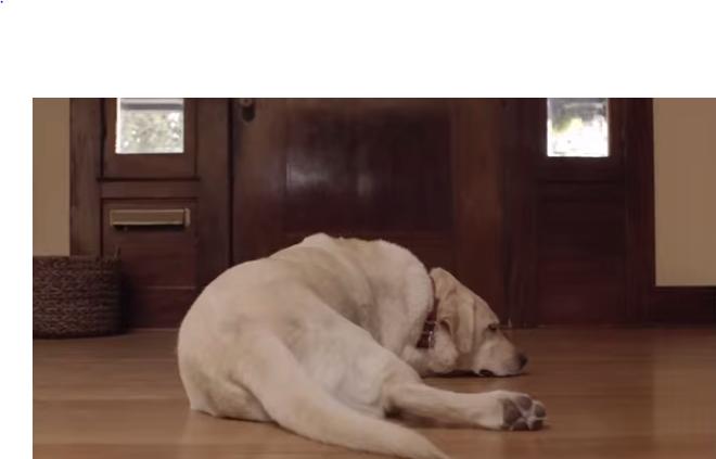 Je hond: genoeg reden om nooit met alcohol op te rijden