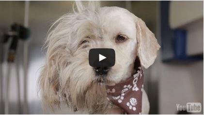 Leven asielhond gered met makeover