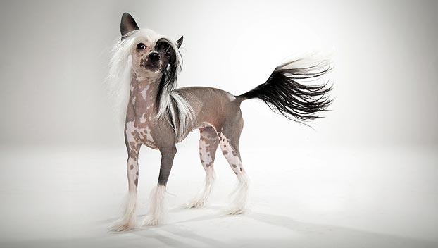 chineese naakthond