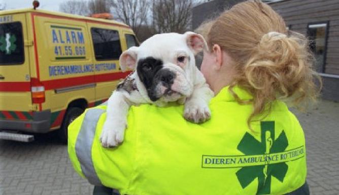 Politie redt honden uit hete auto