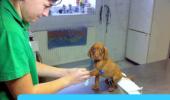 dierenarts puppy