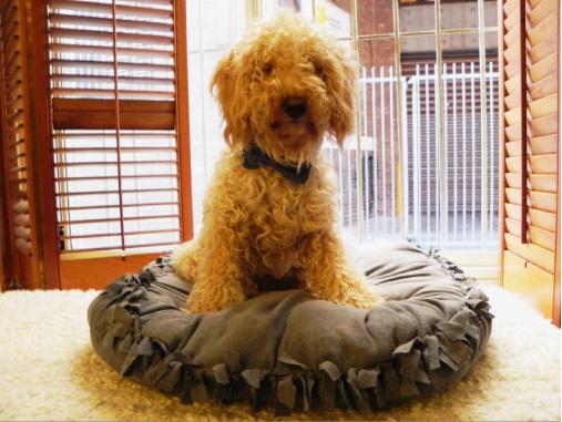 DIY hondenkussen