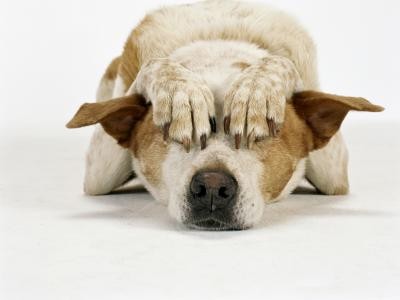 Vuurwerkangst bij honden, hoe ga je hiermee om?
