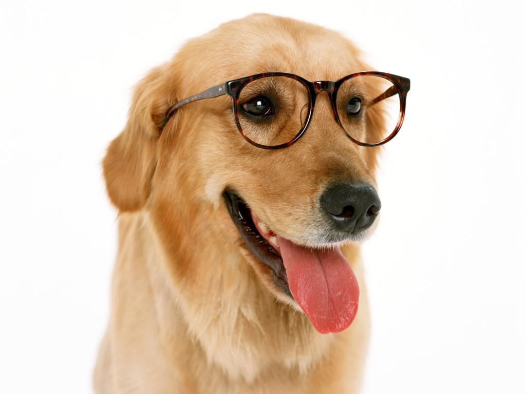 """Spreekwoorden en uitdrukking met """"hond"""""""