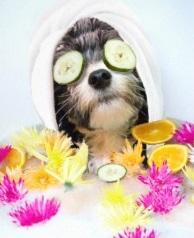 Eetbare verzorgingsproducten voor de hond deel 1