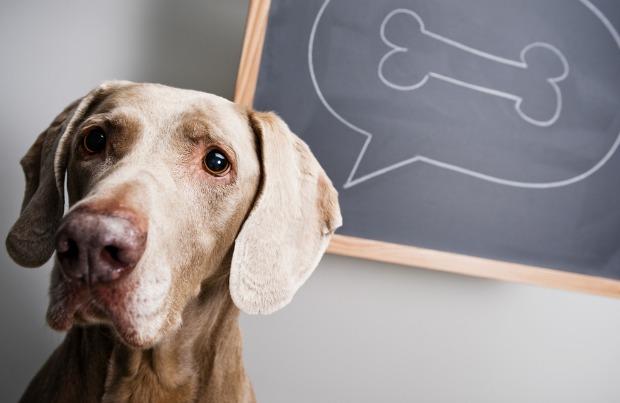 8 trucs voor hondeneigenaren