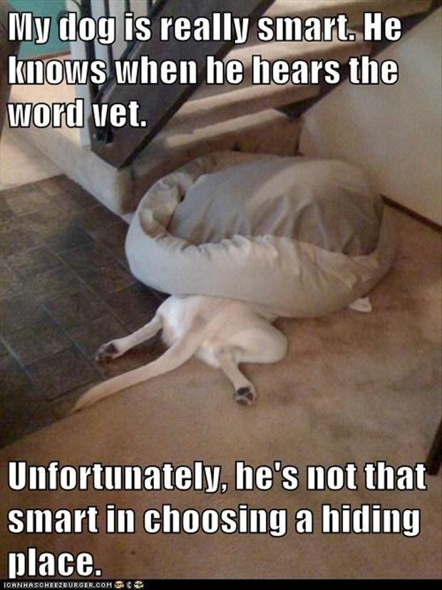 hond dierenarts