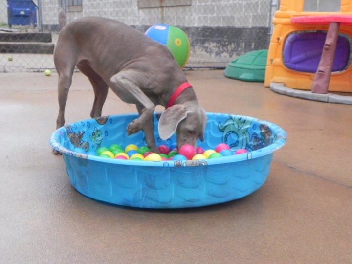 Waterspelletjes met je hond: Snorkelen!