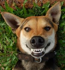 Gebitsproblemen bij honden