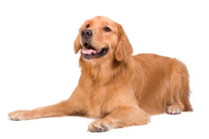 gezondehond