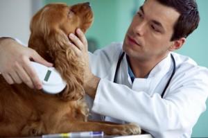microchip hond