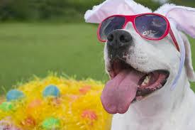 Hondentips voor de lente