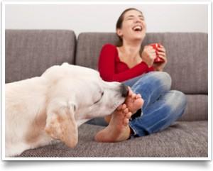 hond likt tenen