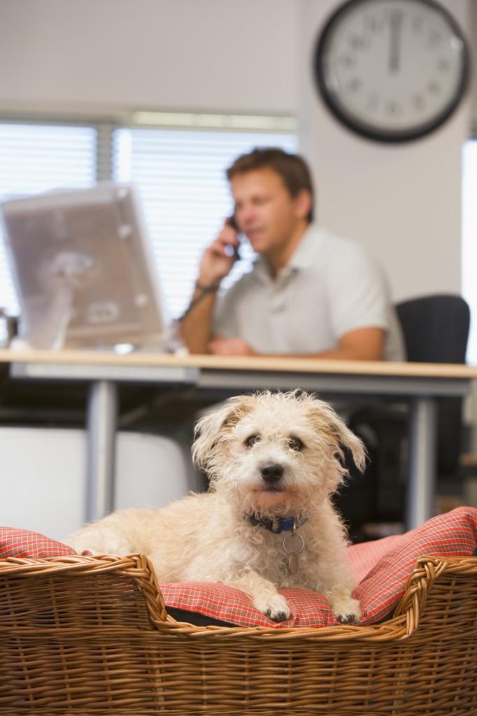 Honden op kantoor, hoe pak je dit aan?