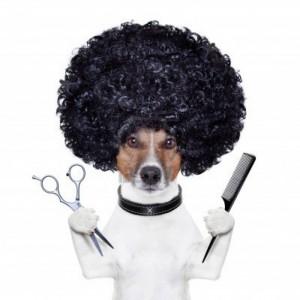 hond trimmen