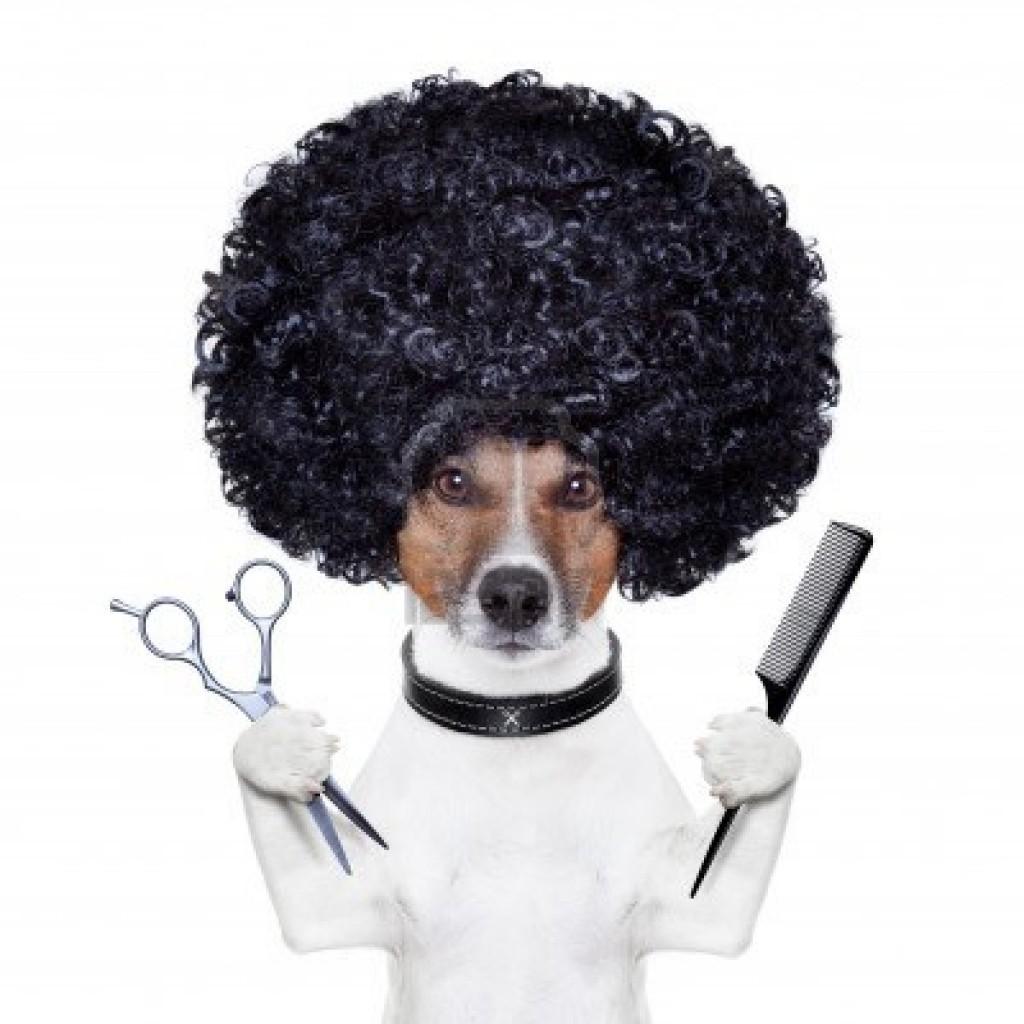 Hoe vaak en wanneer moet een hond getrimd worden?