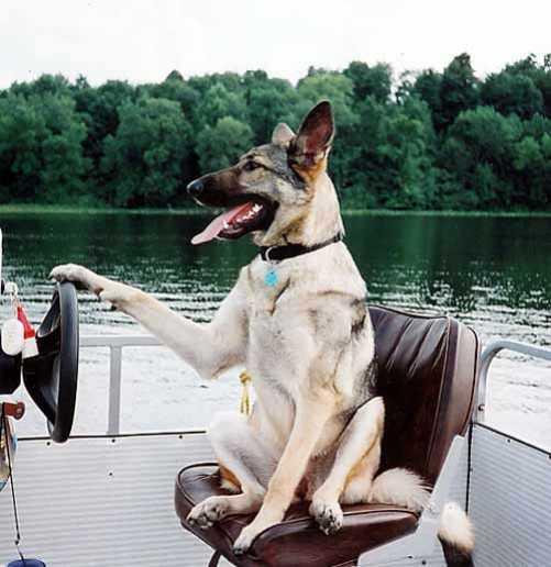 Varen met je hond: 7 veiligheidstips