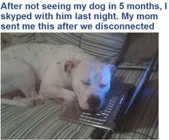 hond skype